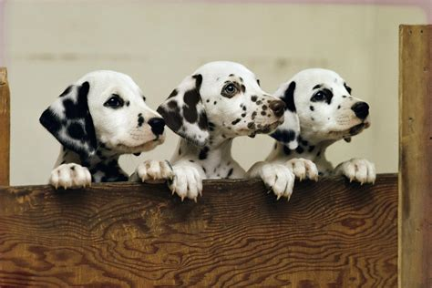 Struggling Relationship? Science Says Puppy Pictures May Help